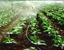 Herbo riego provisin de soluciones de riego de alta for Aspersores agricolas